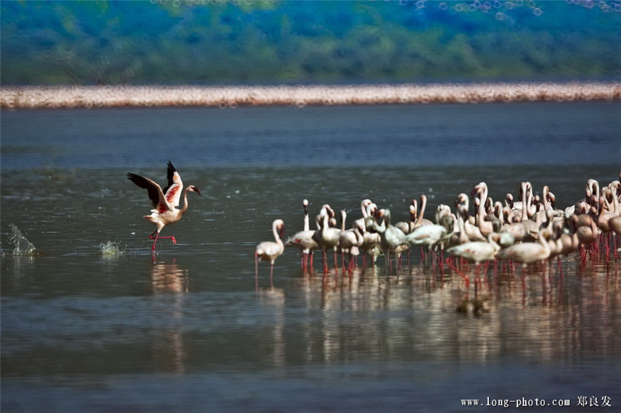 追逐动物的追逐 我们的肯尼亚摄影之旅