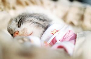 动物摄影:眠