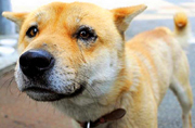 福岛核灾难中被遗忘的动物