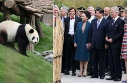 习近平会见比利时国王 共同出席大熊猫园开园仪式