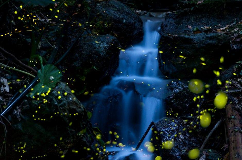 风光摄影:流萤挽歌