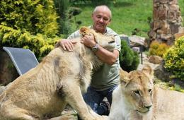"""捷克男子救助幼狮惹争议 被批抚养""""杀手"""""""
