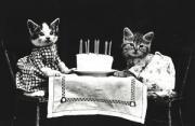 动物摄影:喵家秘史