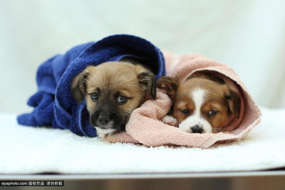 英国动物保护组织为流浪小动物建新家