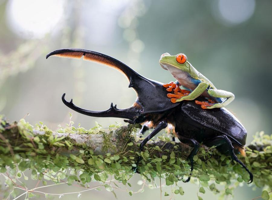 索尼年度摄影赛展现罕见自然之美 -  东方.旭 - 东方.旭的博客