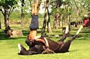 阿根廷借瑜伽驯化野马