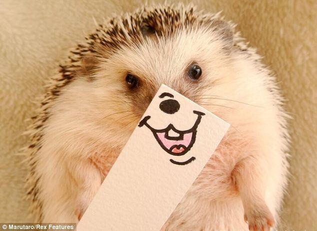 中国笑的最可爱的动物