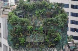 """广州现最牛违建 业主楼顶建""""原始森林""""掩护加盖"""