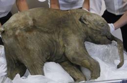 距今逾4万年完整猛犸象将在英国展出