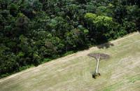 华赛自然与环境类新闻组图获奖照片