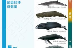 """日本""""科研捕鲸""""到底捕了多少鲸?(图)"""
