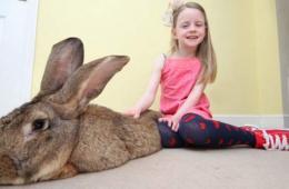 世界最大兔子体长1米重45斤 每年吃4千美元食物