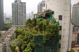"""广州最牛违建""""大绿帽""""开拆 远观如热带森林"""