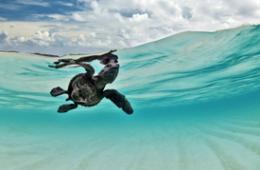 2014年水底世界摄影大赛