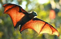英研究:人造光污染致森林再生关键动物迁徙它处