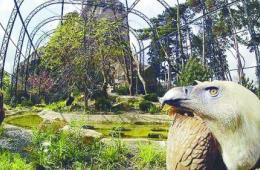 巴黎动物园给动物按籍贯安家 改善动物生活环境