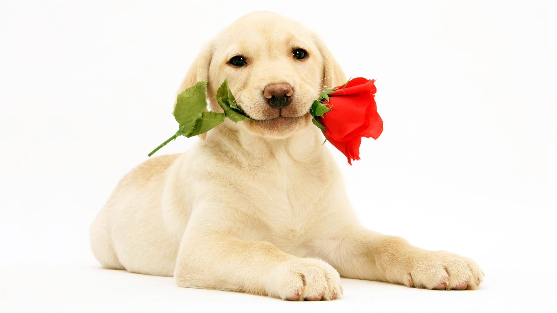 """wwwgougou_美研究称狗狗会释放与人类相似的""""爱情荷尔蒙""""_博览_环球网"""