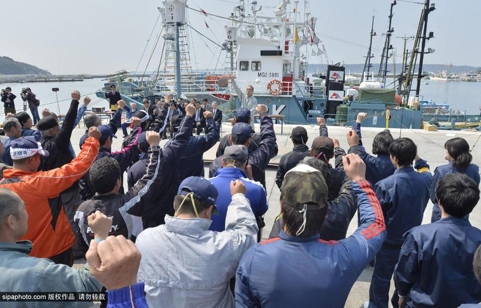 """休渔期结束 日本""""研究""""小须鲸工作开启"""