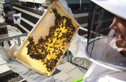 两瑞典女生物学家用创新举措拯救蜜蜂(图)