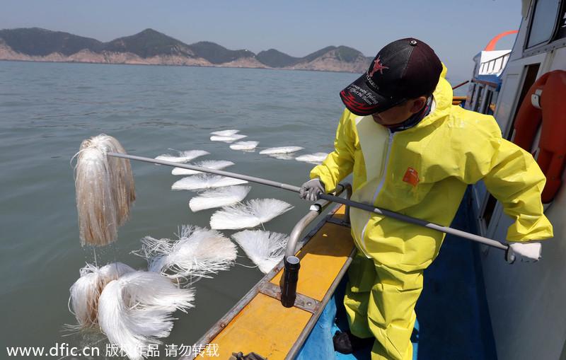 韩国渔民清除沉没客轮海域原油
