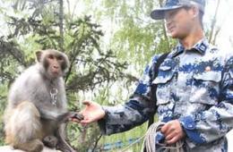 我空军部队养猴子驱鸟令人叫绝