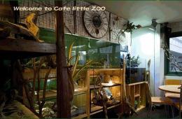 """日本流行""""特殊动物咖啡屋"""" 蜥蜴猫头鹰受热捧"""