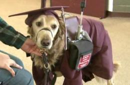 美服务犬身着学士服见证脑瘫主人毕业时刻
