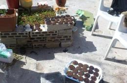 叙利亚反对派食不果腹靠虫子充饥
