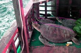 """法媒:菲律宾公布被扣""""中国渔船上死海龟""""照片"""