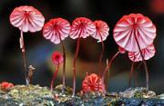 自然风光:萌菌物语
