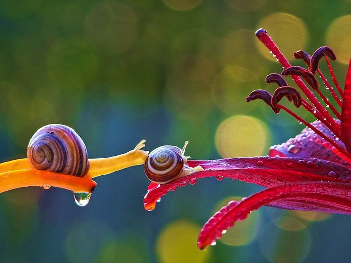 动物摄影:蜗牛情事