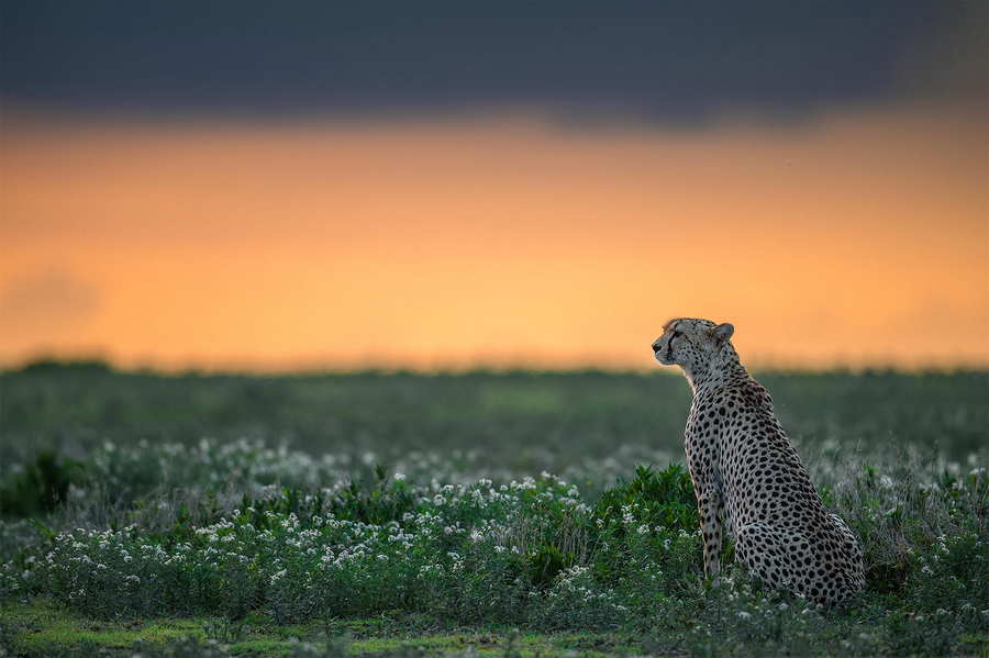 自然的美丽与野性—野生动物