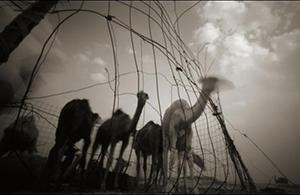 风光摄影:流亡的风景