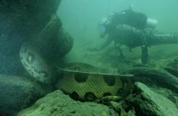 英国探险家亚马逊河中遇6米长恐怖水蟒