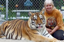 美国女子在自家后院圈养两只孟加拉虎当宠物