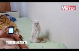 可爱!俄罗斯史上最爱国猫咪站立听国歌