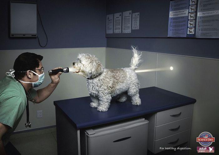 動物創意廣告