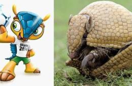 巴西世界杯吉祥物真身三带犰狳栖息地减逾半