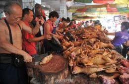 广西玉林否认组织狗肉节:食狗肉系延续饮食习惯