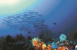 中国海洋治污困境:环保部不下海 海洋部不上岸