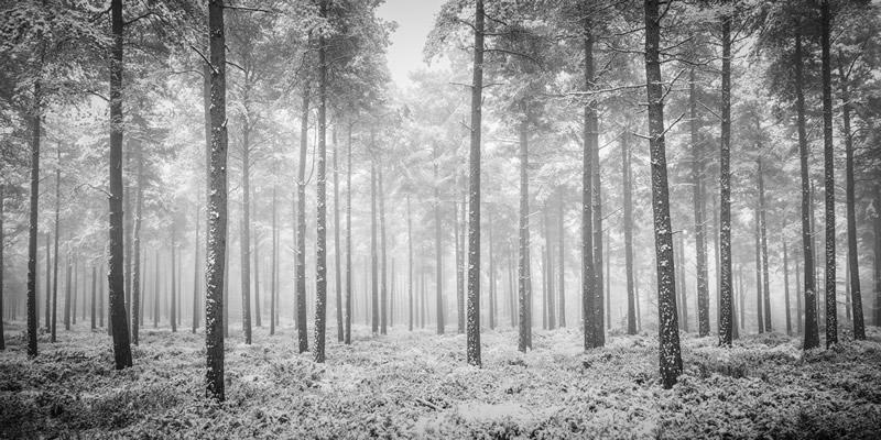 黑白的大自然