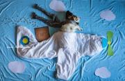 动物摄影:一只狗的奇幻飞行