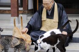 """日本福井县""""猫庙"""" 收养猫咪 引游客无数"""