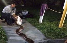 父子在公园发现3.6米长巨蟒 用烧烤架将其捕获