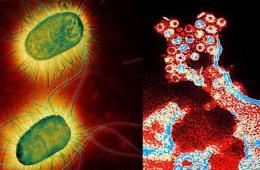 """日本教授造超级病毒 罕见病毒彩照的""""危险之美"""""""