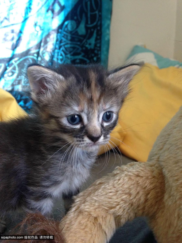 """表情 小猫/英国一表情最悲伤小猫网络爆红被送绰号""""无比忧伤""""(2/7)"""