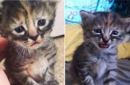 """英国一表情最悲伤小猫网络爆红 被送绰号""""无比忧伤"""""""