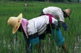 【公益百家谈】生态农业能否养活中国?