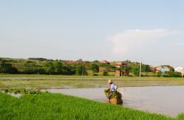 【公益百家谈】土壤污染威胁中国食品安全