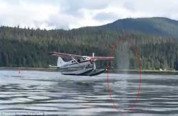 美一架水上飞机降落时险些撞到鲸鱼